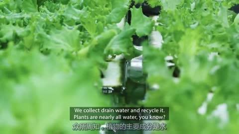 打造智能城市:用垂直农场解决未来粮食问题视频